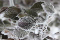 Leavs и заморозок Стоковое фото RF