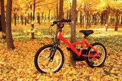 骑自行车与金黄leavs 库存图片