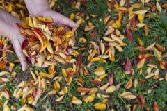 Leavs in autunno immagine stock