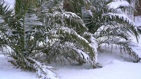 Leavs das palmeiras cobertas com a neve video estoque