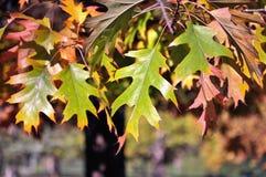 Leavs di autunno Fotografia Stock Libera da Diritti