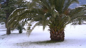 Leavs of palm trees covered with snow. Unusual weather on the Adriatic coast in January 2017 stock video footage