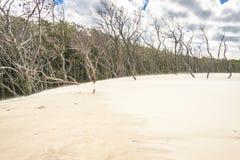 Leba diuny - Unesco miejsce. Zdjęcie Royalty Free