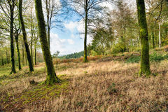 Leball Woods Royalty Free Stock Images