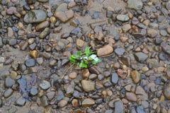 Leben auf den Felsen stockbild