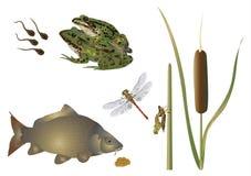 Leben in dem Teich lizenzfreie abbildung