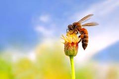 Leben der Biene Stockfotos