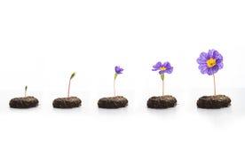 Leben der Blume Lizenzfreie Stockfotos