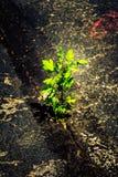 Leben in der starken Umwelt Stockbild