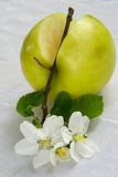 Leben des grünen Apfels Lizenzfreie Stockfotografie