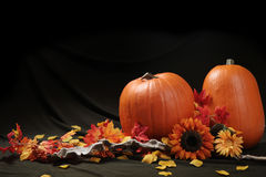 Leben des Herbstkürbises noch Lizenzfreies Stockfoto