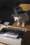 Leben des Hundes Lizenzfreie Stockfotografie