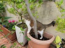 Leben des Katzenhauses im Freien stockbilder