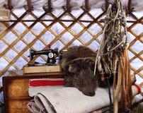 Leben des Nomaden Stockbild