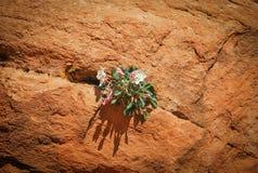 Leben in einem Felsen Stockbild