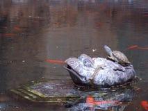 Leben in einem Teich Lizenzfreie Stockfotos