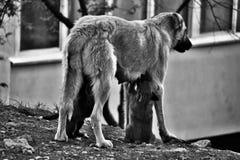 Leben eines Hundes Lizenzfreie Stockbilder