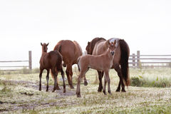 Leben eines kleinen Pferds Lizenzfreie Stockfotos