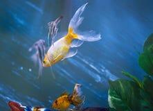 Leben im Aquariumthema Lizenzfreie Stockbilder