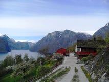 Leben im Fjord stockfoto