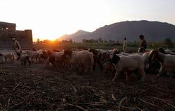 Leben im Fliegenklatsche-Tal, Pakistan Stockbild