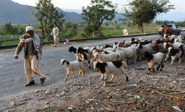 Leben im Fliegenklatsche-Tal, Pakistan Lizenzfreies Stockfoto