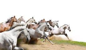 Leben Sie auf Weiß in Herden Stockfotografie