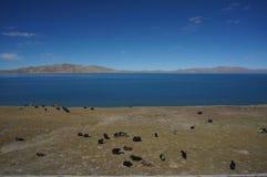 Leben Sie durch den See Stockfoto