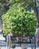 Leben in Siliguri Stockfoto