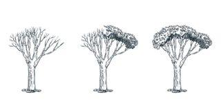 Leben und totes Baumkonzept Gezeichnete Skizzenillustration des Vektors Hand lizenzfreie abbildung