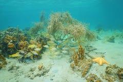 Leben Unterwasser auf einem karibischen Meer des flachen Meeresgrundes Stockfotografie
