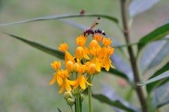 Leben von kleinen Insekten Stockfotos