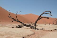 Leben zur Grenze in der Wüste von Namib Stockfotos