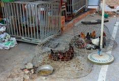 Lebende Hühner für Verkauf in Vietnam lizenzfreie stockbilder