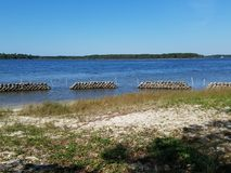 Lebende Küstenlinien im Bayou Lizenzfreie Stockbilder