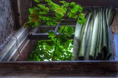 Lebende Pflanze Stockbilder