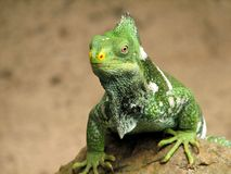 Lebender Dinosaurier Lizenzfreie Stockfotografie