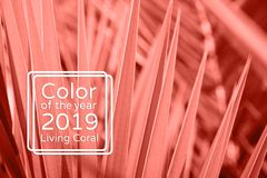 Lebender korallenroter Farbpalmblatthintergrund lizenzfreie stockbilder