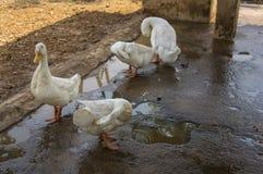 Lebenfütterungszaunkonzept der Farm der Tiere Stockfotos