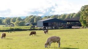 Lebens- Bauernhoffeld des Landes Stockbilder