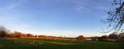 Lebens- Bauernhoffeld des Landes mit Schafen - Panorama-Bild Lizenzfreie Stockbilder