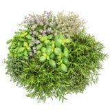 Lebensmittel-Basilikumrosmarinthymian Hintergrund der frischen Kräuter weißer wohlschmeckend lizenzfreies stockfoto