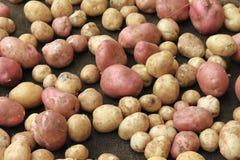 Lebensmittel des rohen Gemüses der Kartoffeln auf dem Rausschmiß für Musterbeschaffenheit und -hintergrund Stockbild