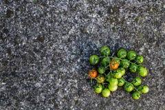 Lebensmittelhintergrund: grüne, rote Tomaten, Steinhintergrund, Draufsicht Stockbilder