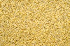 Lebensmittelhintergrund von gelben Körnern von Hirse Stockbild