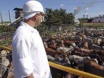 Lebensmittelindustrie Lizenzfreie Stockbilder