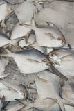Lebensmittelinhaltsstoff, Fisch Stockbild