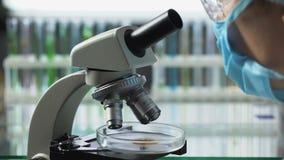 Lebensmitteltechnologieingenieur, Palmöl unter dem Mikroskop beobachtend, Qualität überprüfend stock video