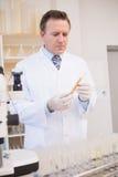 Lebensmittelwissenschaftler, der Reagenzglas mit Samen betrachtet stockfotos