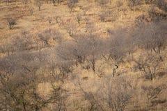 Lebensraumbild mit einem weiblichen Tiger und ihren drei neuen Jungen an Nationalpark Ranthambore Eine schöne Tigerin Noor und ih stockbilder